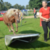 Horse-Agility-Showring