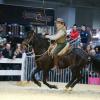 Maremma-Pferde im Tagesprogramm