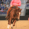 Pferd & Jagd ARENA