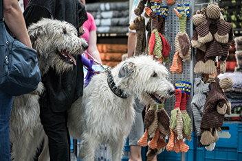 hunde messe hannover
