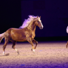 Nacht der Pferde