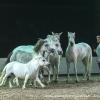 Pferdeflüsterer Jean-Francois Pignon